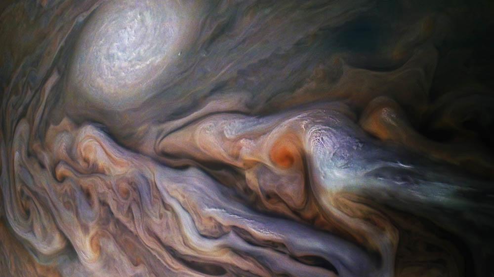 Dolphin in Jupiter