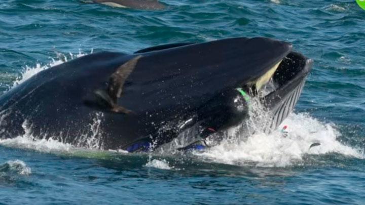 buzo-ballena