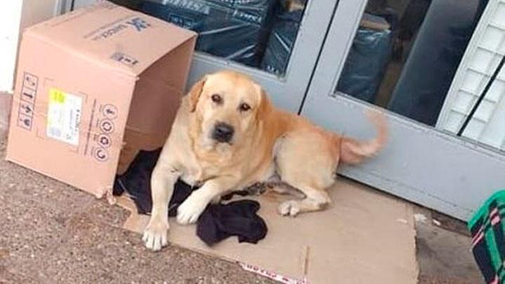 Toto, el perro de Jujuy Argentina
